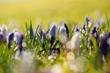 spring-flowers-13635086725z1